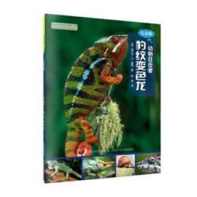 全新正版图书 豹纹变色龙:儿童版丽贝卡·赫希河北少年儿童出版社9787537695671 蜥蜴科少年读物只售正版图书