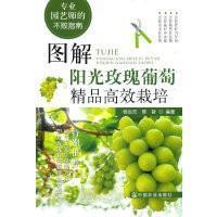 图解阳光玫瑰葡萄精品高效栽培(专业园艺师的不败指南)