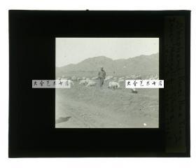清代民国玻璃幻灯片-----1936年甘肃的放羊人