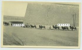 民国时期北京城墙之下的交通运输骆驼队,此处城墙失修都有裂纹了。14X8.3厘米
