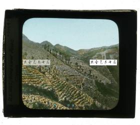清代民国玻璃幻灯片-----民国时期大面积的茶园茶树种植,标注内容不明