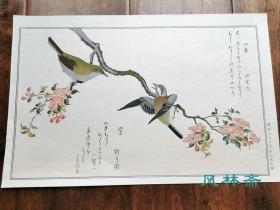 山雀与莺 喜多川歌麿《绘本百千鸟》安达复刻 日本浮世绘花鸟画杰作 从芥子园十竹斋到博物写生图