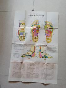 最新标准经穴部位图(1开彩印)