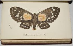 【特价】1897 年 HANDBOOK LEPIDOPTERA _ Butterflies & Moths 博物学名著《蝶蛾图志之: 彩蛾篇》 第5辑 32张原品珂罗版手工上色版画