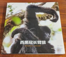 西黑冠长臂猿