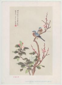 1957年一版一印《红梅山茶》独立画片,  叶矩吾作  ,16开   上海画片出版社