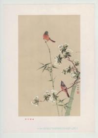 1957年一版一印《同声相应》独立画片,  孙悟音作  ,16开   上海画片出版社