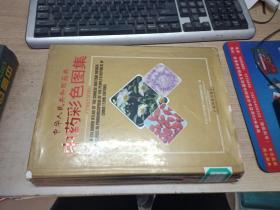 中华人民共和国药典中药彩色图集(1995年版)【馆藏】