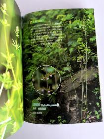 正版现货 城市野花(精华版口袋书) 王辰 著 与【城市野趣一日一花内容一致】 北京大学出版社