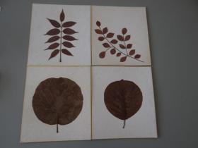 南丰教授同批老纸04:日本空白植物标本4枚!1985年!