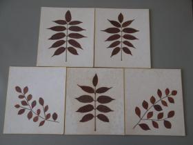 南丰教授同批老纸03:日本空白植物标本5枚!1985年!