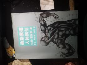 动态素描.人体解剖(中文简体字版)