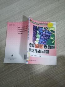 提高葡萄商品性栽培技术问答