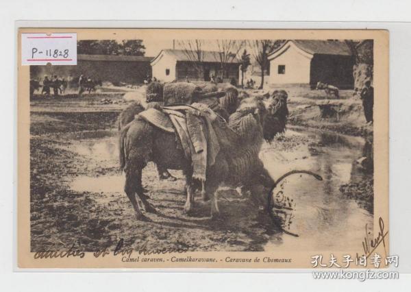 北京骆驼清末老明信片