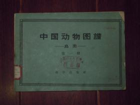 中国动物图谱:鸟类(第一册)(1959年1版1印 自然旧纸张泛黄 底封皮缺损 内页局部有水印迹 局部有黄斑 有馆藏印章及标签 品相看图)