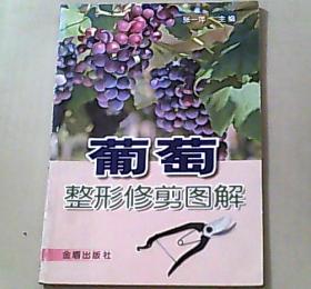 葡萄整形修剪图解