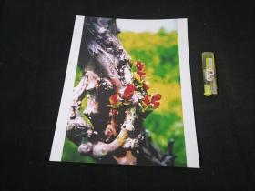 照片:古树生新芽