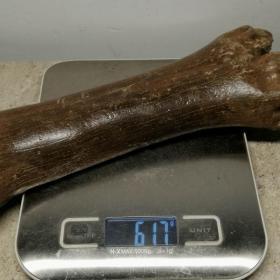 """骨化石,冰河时期骨化石,xiniu骨化石,包浆醇厚,沁色自然,紫色骨化石,顶级极品骨化石""""xiniu骨化石"""",""""罕见xiniu骨化石"""",小腿骨化石,极为稀有罕见,可遇不可求,百年难得一件,极为罕见十分难得,收藏佳品"""