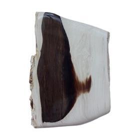 """木化石,树化玉,顶级极品纯天然极为罕见和难得的黑色""""树纹木化石"""",""""罕见树木纤维木纹木化石"""",""""温润无比"""",黑色纤维树化玉,极为稀有罕见,可遇不可求,百年难得一件,极为罕见十分难得,收藏佳品"""