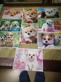 明信片宠物乐园