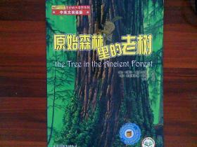 原始森林里的老树