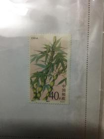邮票:观音竹