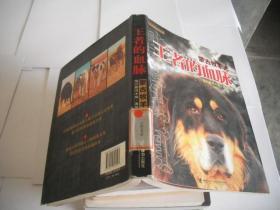 王者的血脉:蒙古牧羊犬