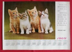 旧藏挂历年历画单页 1985年四只小猫咪 摄影