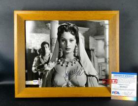 """""""意大利永远的女神""""索菲亚罗兰 签名照片(8×10英寸,附框) 由三大签名鉴定公司之一PSA/DNA鉴定"""