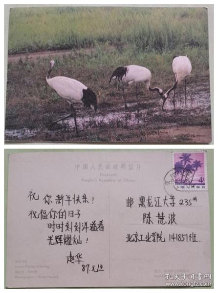 实寄明信片--春鹤寻觅.丹顶鹤