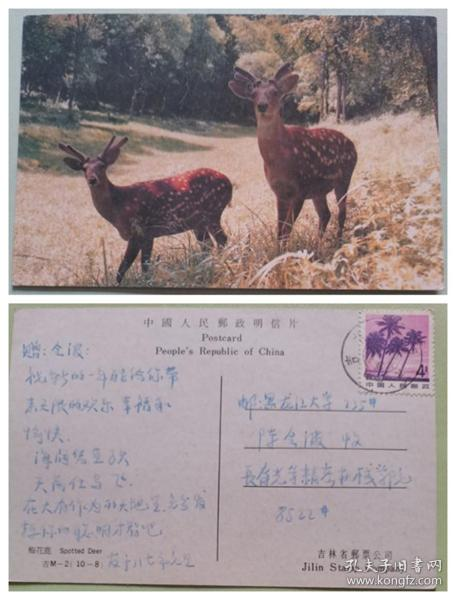 实寄明信片--梅花鹿
