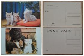 明信片--猫咪和小狗