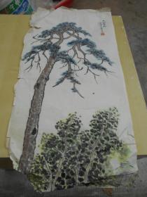 南京大学吴维瑛【国画,六朝古松】左小角有缺。尺寸:67×33.4厘米