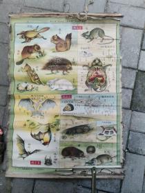 建国前后动物挂图-脊椎动物