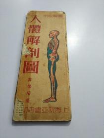 人体解剖图