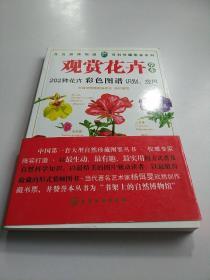 观赏花卉(草本)