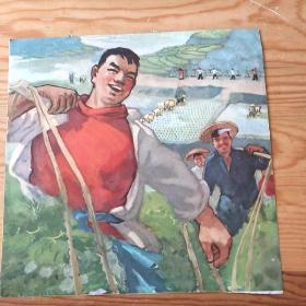 农民,精品,单页,9:30号上