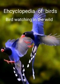 鸟类百科全书 (英文)