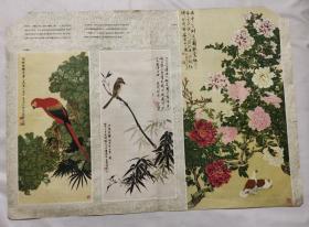 单张画页  五彩鹦鹉 绿竹胡伯劳 牡丹鸽子