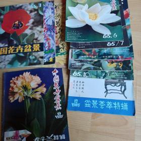 中国花卉盆景 1985年1、2、3、6、7、8、9、10、12+君子兰特刊
