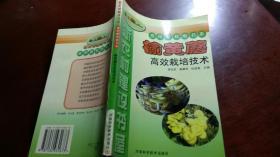 榆黄蘑高效栽培技术