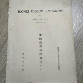 中国蕨类植物图谱 第五卷