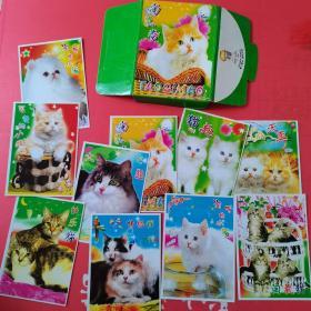 淘气猫:明信片