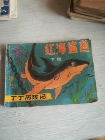 红海鲨鱼   下