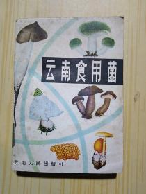 云南食用菌