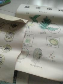 高中生物教学挂图,1地衣植物.2豌豆传粉示意图3公鸡生殖器4细胞膜的结构5植物体里水份上升途径6生物的进化7生殖和发育8生物的新陈代谢9种群年龄组织的三种类型10生物与环境11遗传的基本规律12生物的变异13哇卵的发育过程14团的有幸生殖15原生质的各种成分比例16细胞17遗传的物质基础18生命的起源 等等20张教学挂图一起合售如图