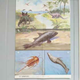 小学课本教学挂图 23动物的进化 全套85幅