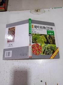 精选观叶植物225种(第6辑)