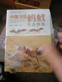 中国习见蚂蚁生态图鉴