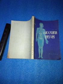 人体x线解剖图谱 科学出版社
